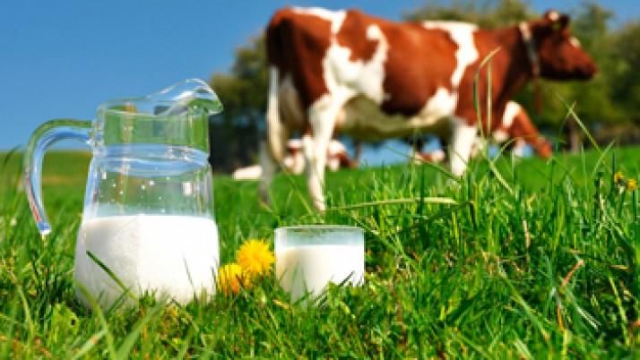En Argentina se comienza a producir leche con propiedades protectoras del corazón