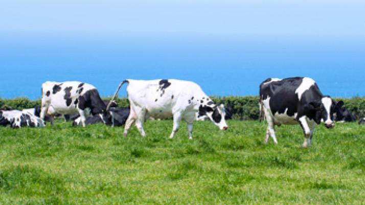 Informar sobre el verdadero valor de los productos lácteos