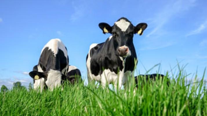 Brasil: investigadores desarrollan un tipo de leche más sana
