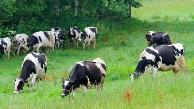 La leche de soja no es leche: la Unión Europea impide etiquetarla como tal