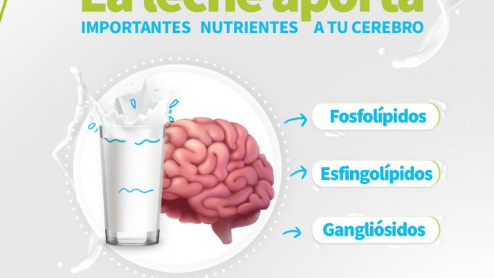 Lácteos en el desarrollo del cerebro
