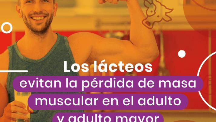 Los lácteos evitan la pérdida de masa muscular en el adulto y adulto mayor. 