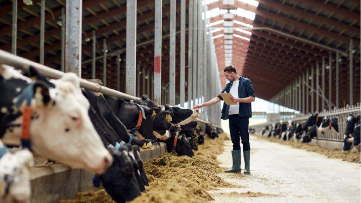 Leche de vaca: mitos y realidades